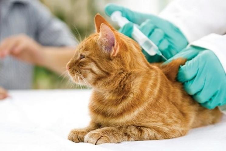 Il sarcoma da iniezione nel gatto: cos'è? | Prevenzione e cura | Salute | Magazine