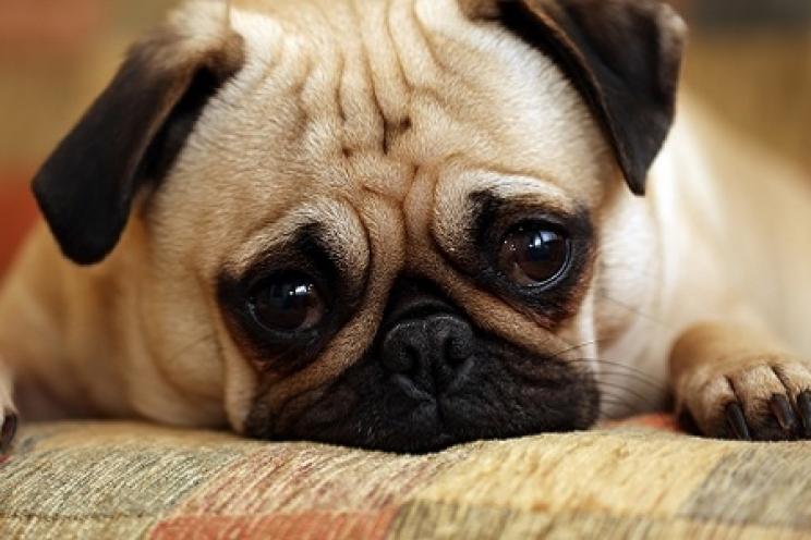 Il Vomito Nel Cane Le Cause E I Rimedi Prevenzione E Cura
