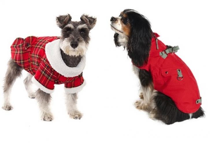 Cappottino Per Il Cane Si O No Guide Pratiche Benessere Magazine