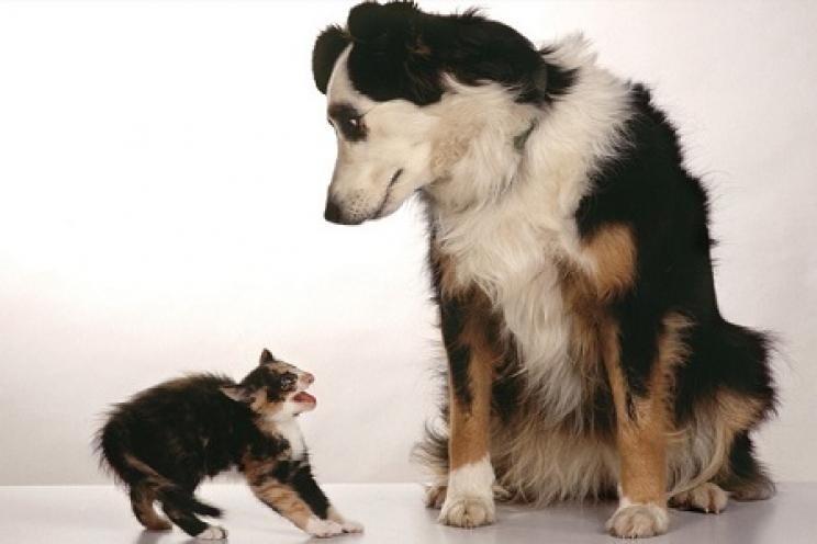 Problemi Di Convivenza Tra Cani E Gatti Come Evitarli