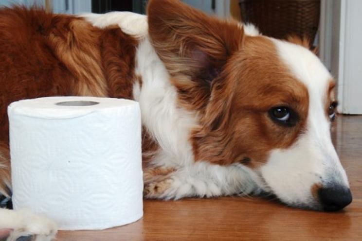 La Diarrea Nel Cane E Nel Gatto Cause E Rimedi Prevenzione E Cura