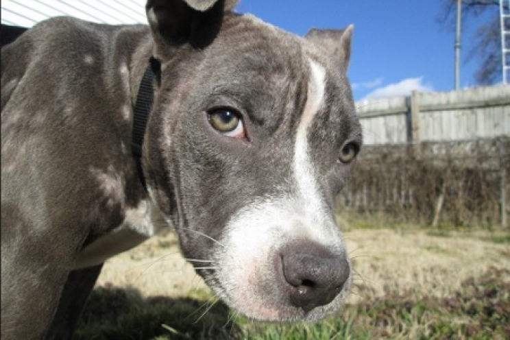 La Perdita Di Pelo Nel Cane E Nel Gatto Cause E Rimedi