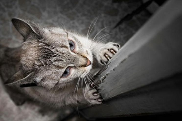 Gatti E Divani In Pelle.Cosa Fare Se Il Gatto Si Fa Le Unghie Sul Divano E Sui Mobili