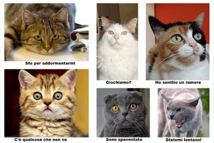 Il Linguaggio Non Verbale Del Gatto Come Interpretarlo Guide