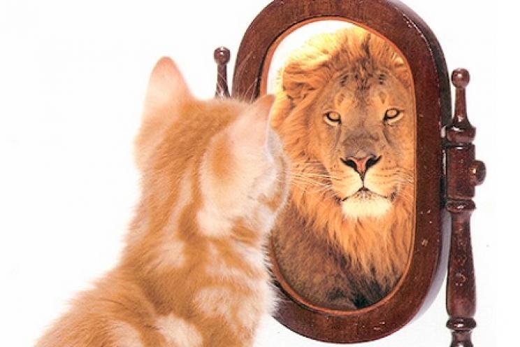 Cosa vedono cani e gatti nello specchio?   Novità   Magazine