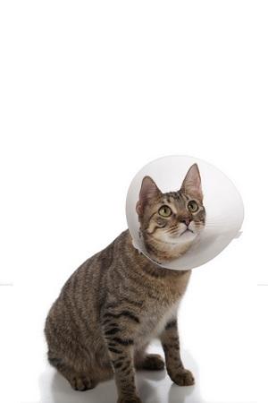 minzione ripetuto gatto piccole sacco leccare luretra